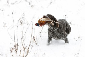 5882873-hunting-dog-with-a-catch